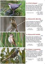 Les oiseaux des lacs en Suisse